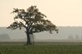 Drzewo-samotność Autor Grzegorz Sawko