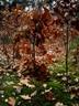 Młody las jesienią  Autor Ewa Oleńkiewicz