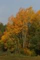 Barwy jesieni  Autor Grzegorz Sawko