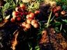 Owoce jesieni  Autor Ewa Oleńkiewicz