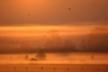 Mgły zbocianami  Autor Grzegorz Sawko